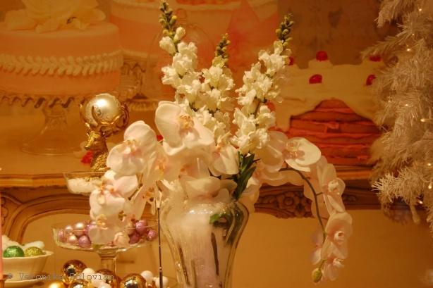 http://www.suomi.ru/fotoreports/vitriny/orchid.jpg